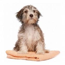 ¡ Toalla Microfibra Ultra Absorbente Para Baño De Mascota !! (Entrega Inmediata)